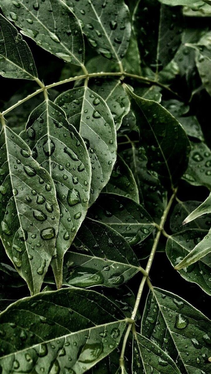 Image about black in plants by Private User on We Heart It