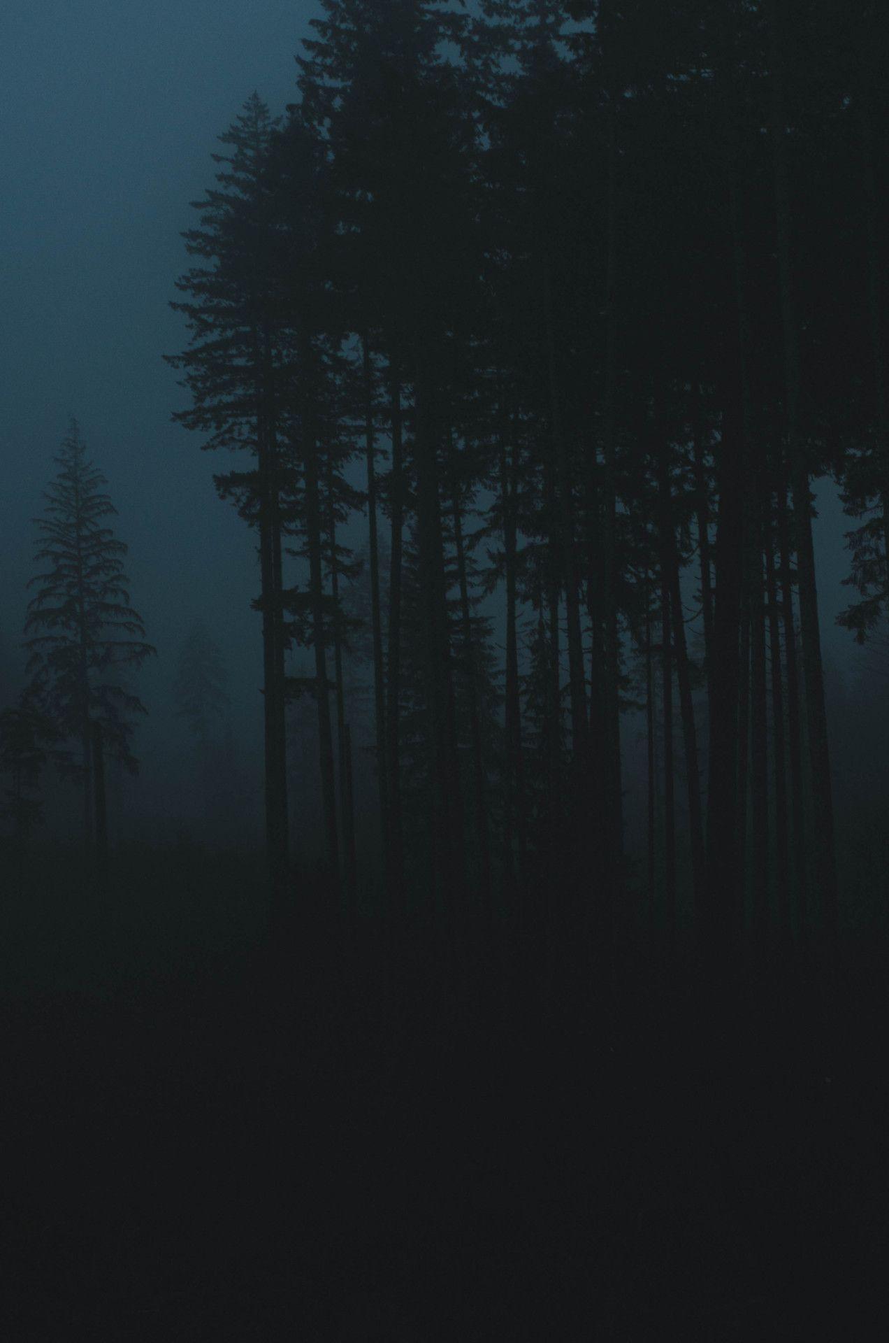 Millivedder Fog At Dusk Prints Dark Landscape Dark Photography Night Forest
