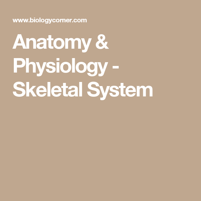 Anatomy & Physiology - Skeletal System | recursos 3rESO by Elisabet ...