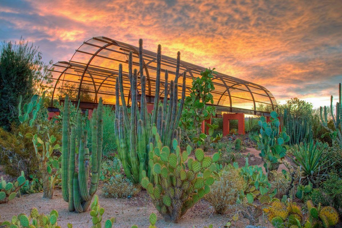 Dessert Museum, Tuscon, AZ Desert botanical garden