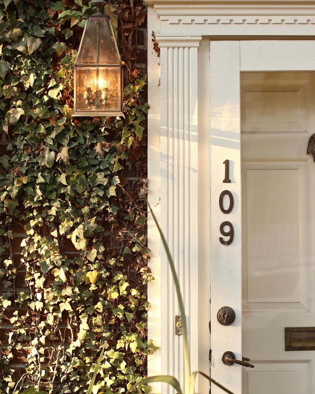 // 109  #hous #architecture #downtown #wilmington #canon #canon_official #door #ivy #englishivy #light