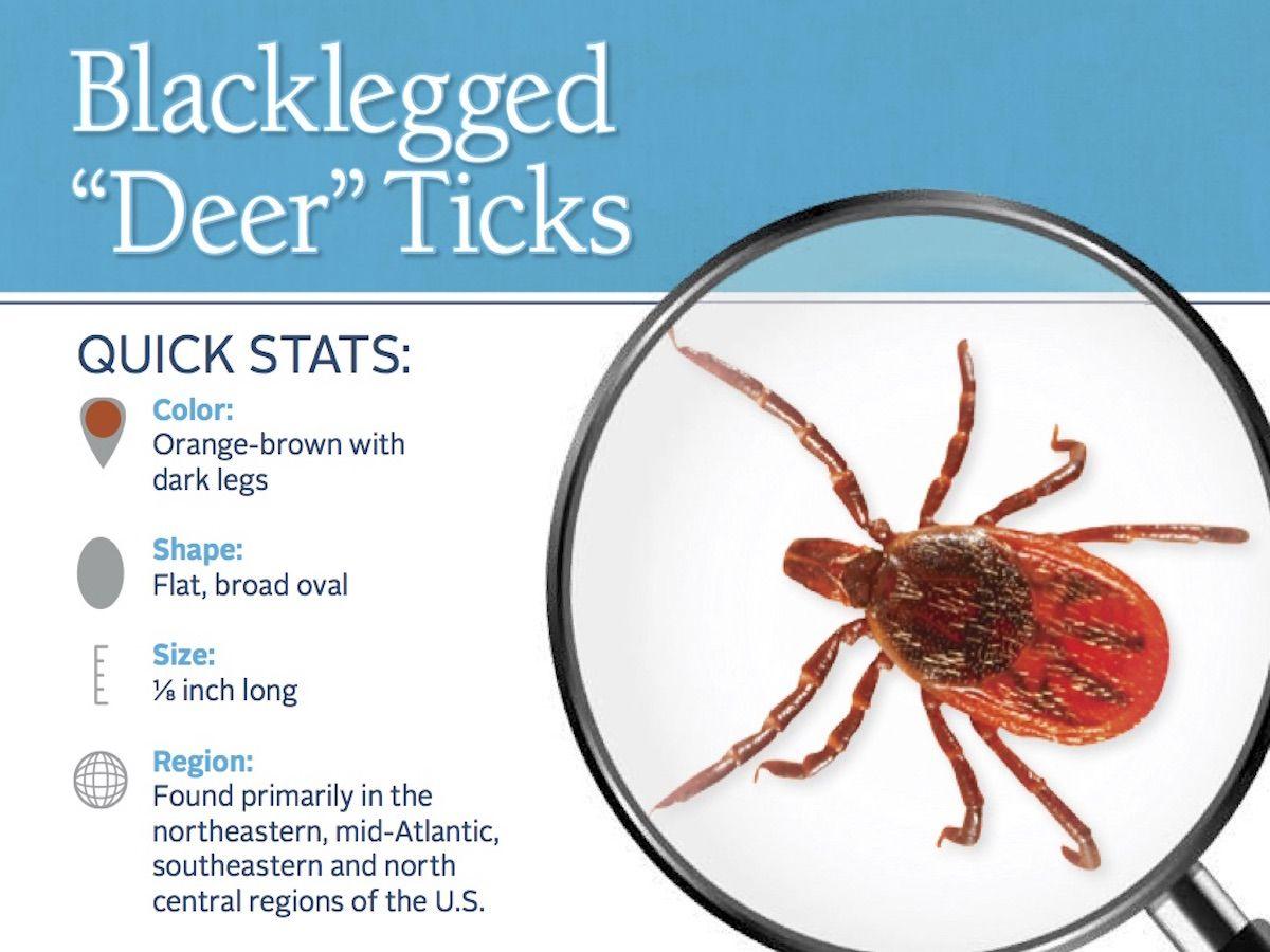 Blacklegged Tick Pest ID Card_Front.jpg Deer ticks