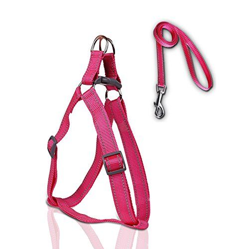 Wotefusi Dog Cat cat Walking Leash Harness Adjustable Collar Safety Strap Reflective * Find out more details by clicking the image : Cat Collar, Harness and Leash