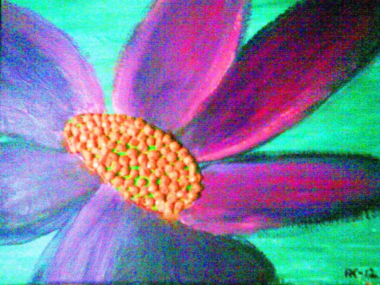Art that symbolizes love acrylic painting flowers