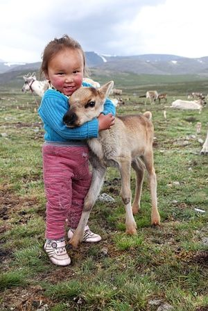 Tuvshinbayar cuddles a baby reindeer