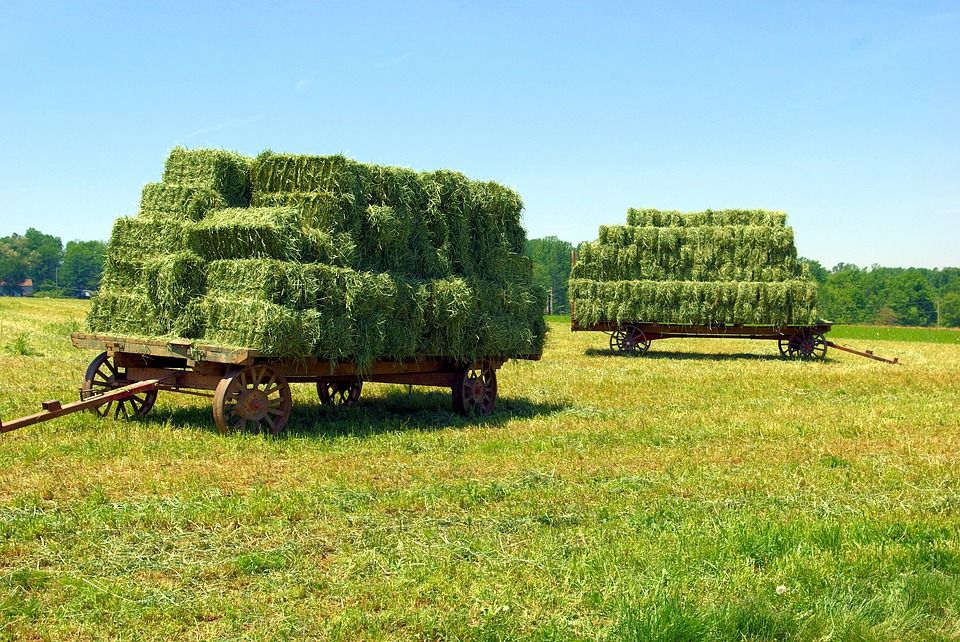 Free Image On Pixabay Amish Hay Wagons Hay Bales Wagon