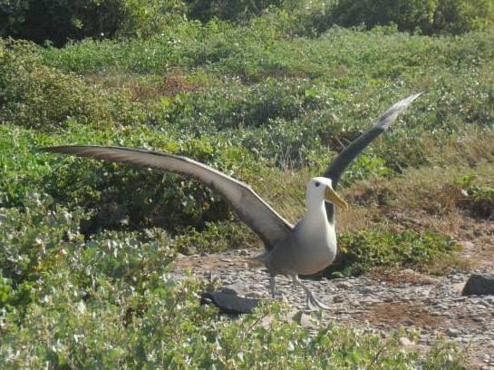 Galápagos, foto de nuestra estudiante Dhamee Tailor