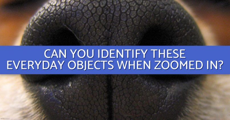 Can You Identify These Objects Close-Up?   All the Nice