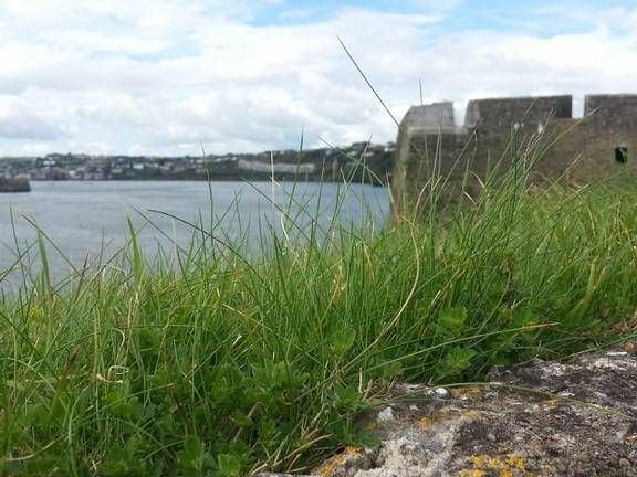 Pet Sitter required for approx 3 weeks in Kinsale, Co. Cork, Ireland  House Sitter Needed  Ireland, cork   cork,kinsale Ireland  Oct 2,2014 For 10 days | Short Term Not a member? Join today to contact homeowner maeveoc We're looking for a house sitter from 02 Oct to 11 Oct who can take care of our cat and keep the home and garden maintained and tidy. We're located on the outskirts of Kinsale which is a quaint fishing village in the south of Ireland.