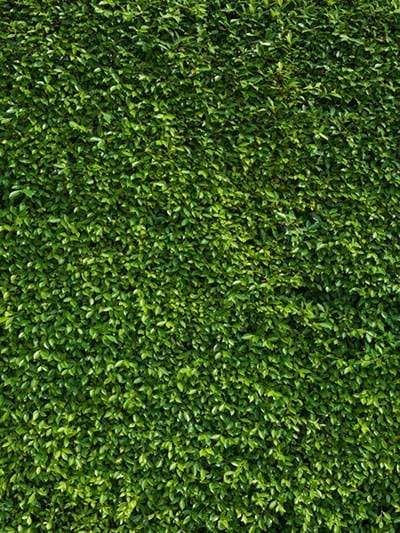 Kate Spring Scenery Green Leaves Photography Backdrop - 6.5x10ft(2x3m)