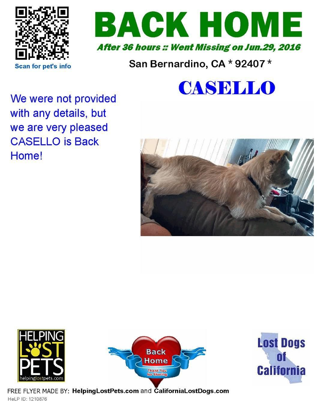 Backhome Casella Chihuahua Mix From Sanbernardino Ca Has Been Reunited With His Family Lost 6 29 16 Back Home 6 30 16 Losing A Dog Losing A Pet Dogs