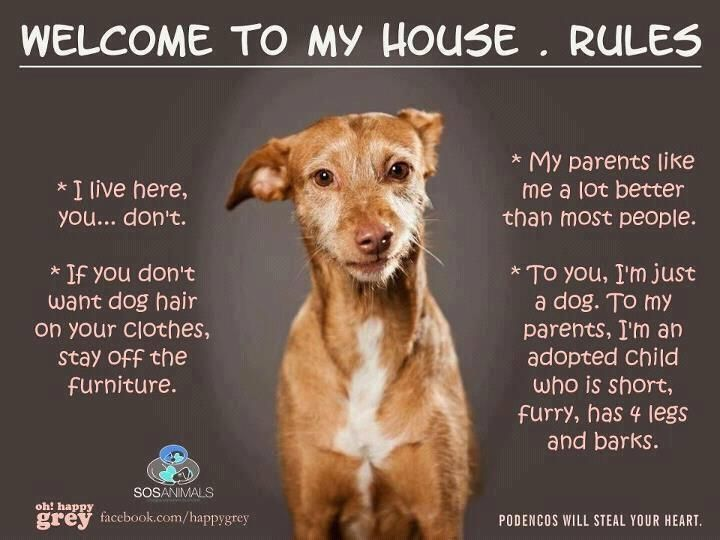 Pet Humor Welcome To My House Rules I Live Here You Don T
