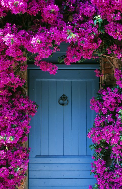 20 Gorgeous Flowering Vines To Add To Your Yard Fast 400 x 300