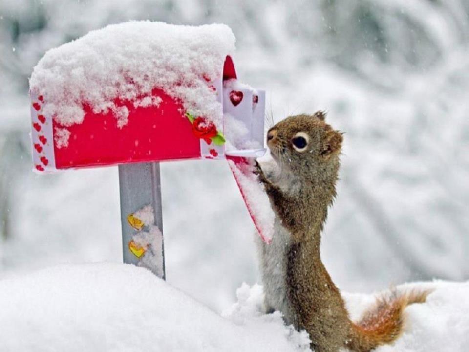Xmas for Squirrels ♥
