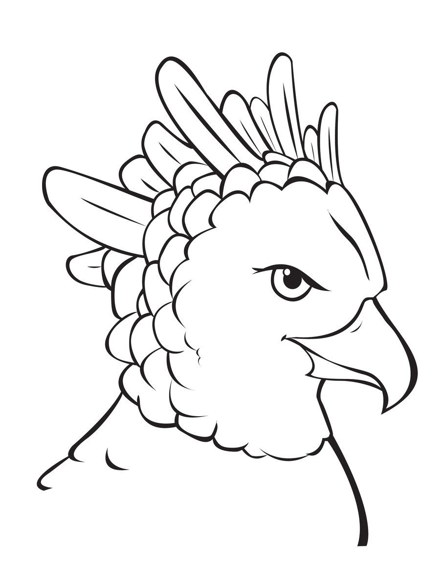 Harpy Eagle Coloring Sheet Eagle Drawing Turtle Art