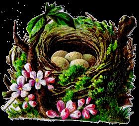 Free Printable Bird Nest Clip Art Royalty Free Antique Graphics from knickoftimeinteriors.blogspot.com