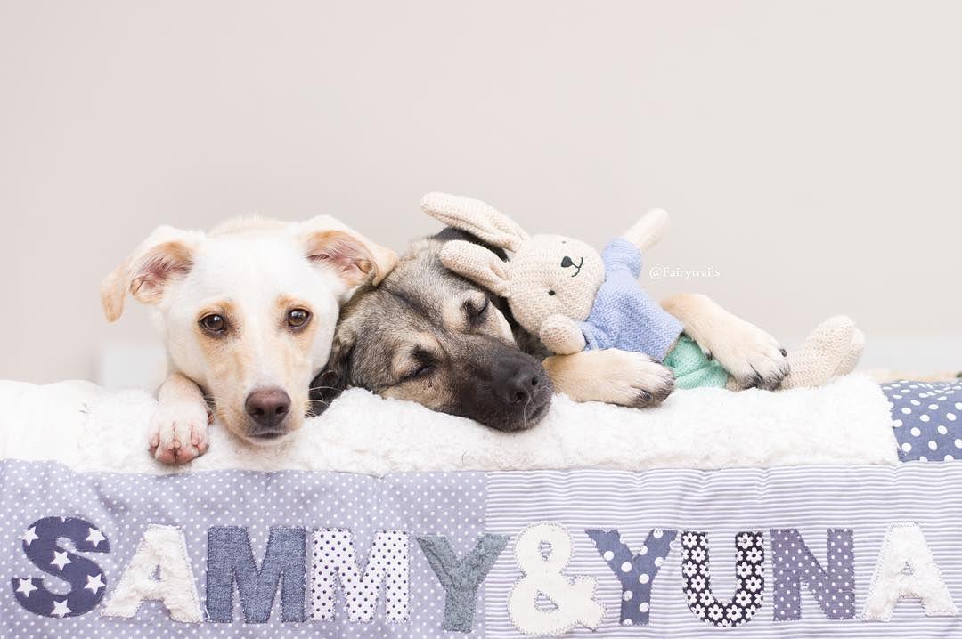Freundschaft heißt, selbst die Lieblingskuscheldecke zu teilen. Sammy und Yuna auf ihrer kuschligen Hundedecke mit Teddyplüsch. Handgemachte und individualisierbare Decken für Hunde auf www.ztoff.de - Das ideale Geschenk für Hundebesitzer. Foto: https://www.instagram.com/fairytrails/