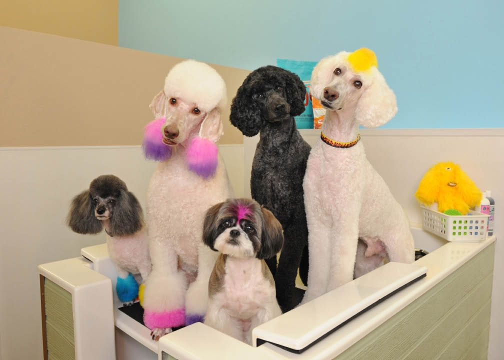 Servepets 4 Excellent Pet Grooming Services Pet Wash Transportation Day Camp And Many More Pet Grooming Service Animal Pets