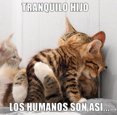 Soy un gato, tuve suerte, de no ser un ser humano de esos que sólo hacen daño