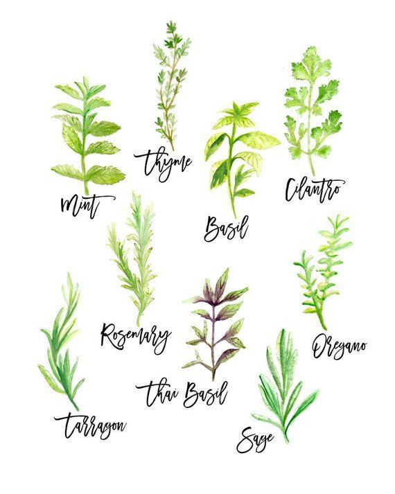 Kitchen Wall Art of Herbs Plant Print Botanical Prints Home Decor Kitchen Decor illustration Wall Ha Source by etsy decor plants