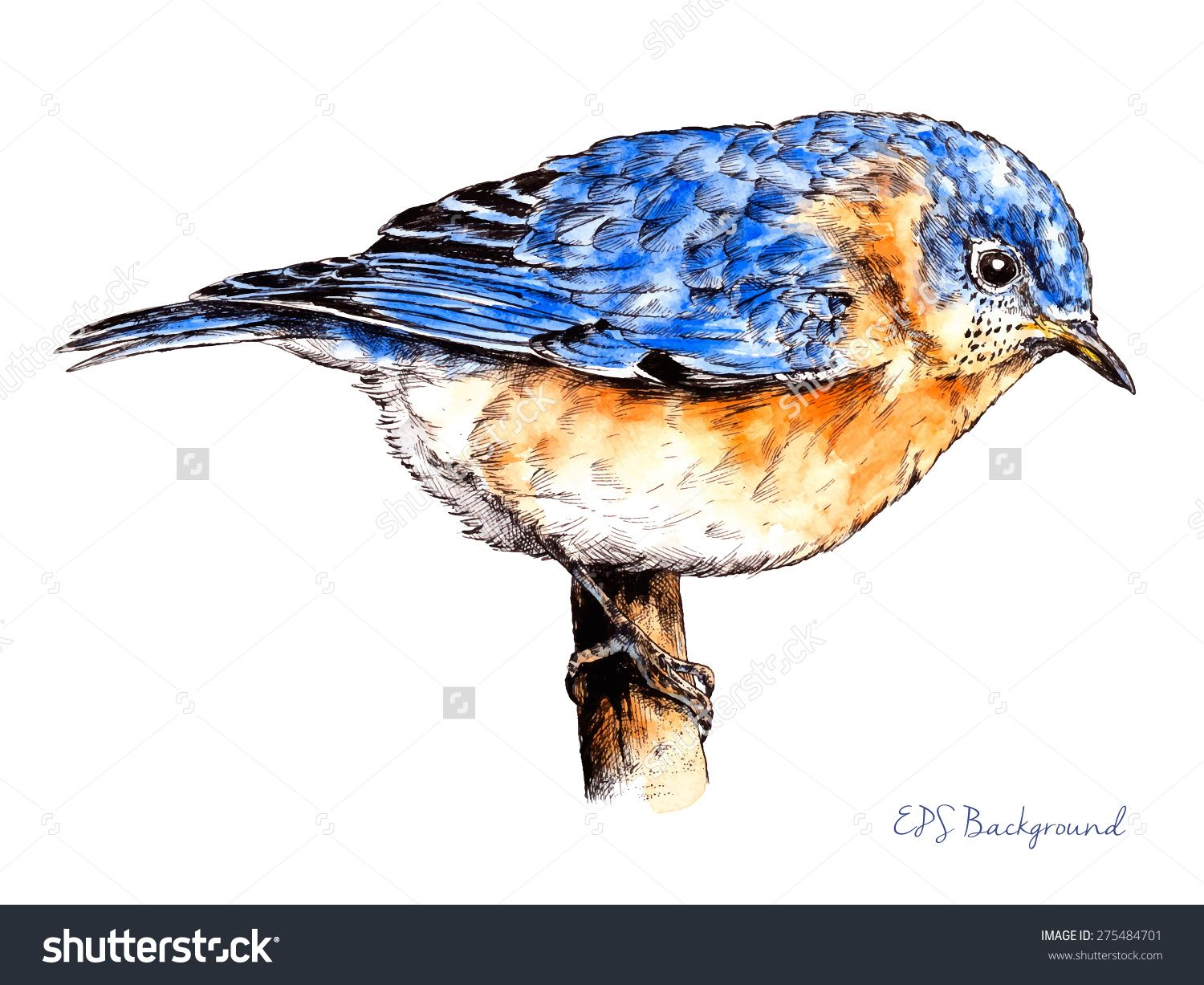 Realistic Bird Sketch Hand Drawn With Pen Ink And