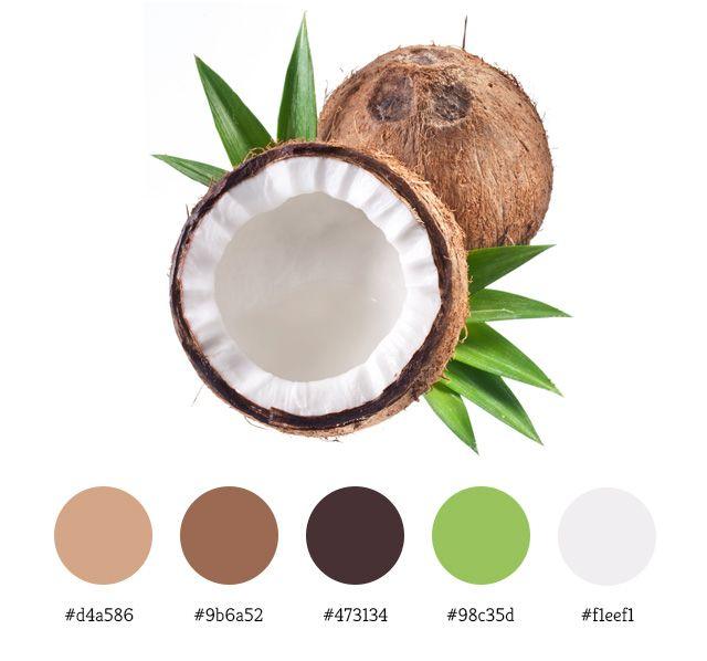 Tropical Beach Color Palette: Coconut Color Palette