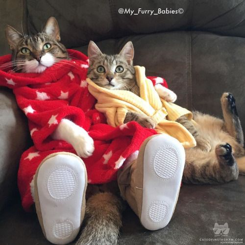 From @my_furry_babies: Joey & baby Morrison :) #catsofinstagram [source: http://ift.tt/1Ow5HRi ]