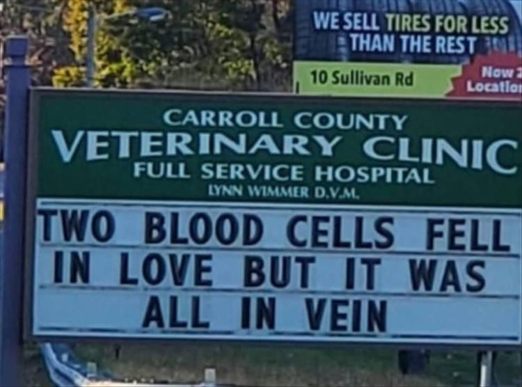 The Carroll County Vet Clinic Is The Only Clinic I Want To