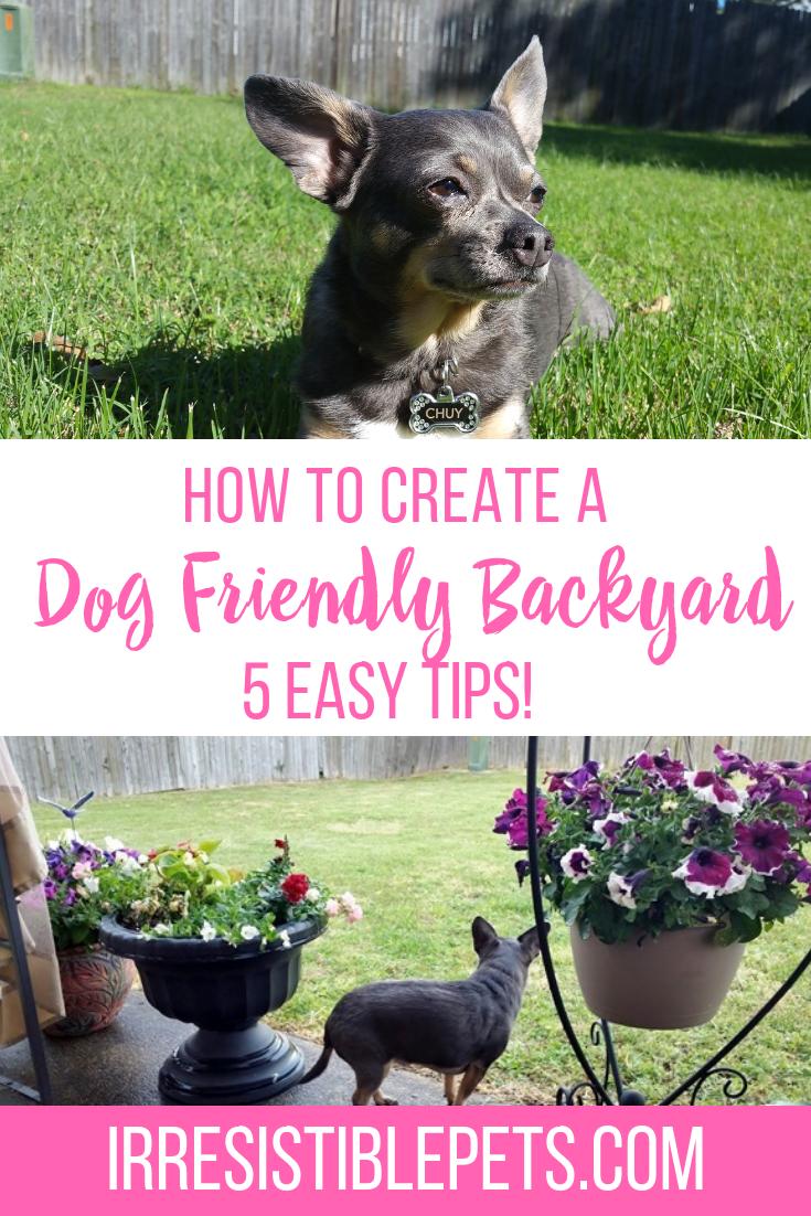 5 Ways To Create A Dog Friendly Yard Dog Friends Dogs Pet
