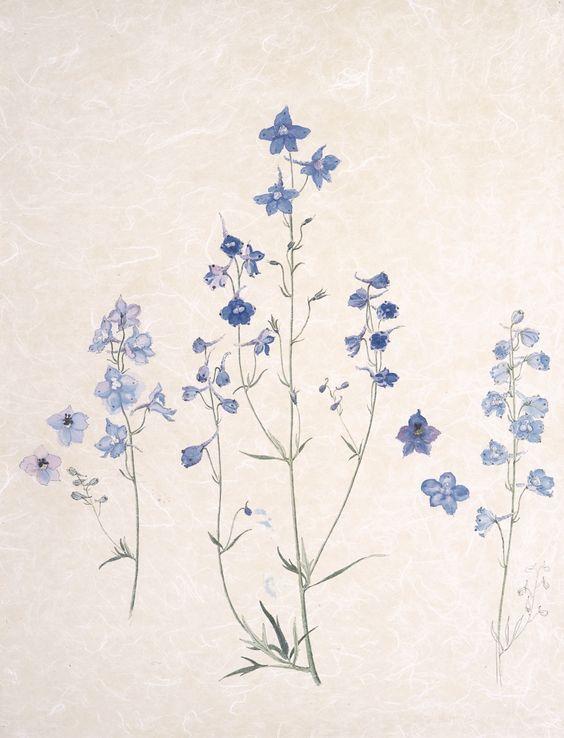 Sense Sensibility Deborah Duchess Of Devonshire Larkspur Tattoo Delphinium Tattoo Larkspur Flower Tattoos