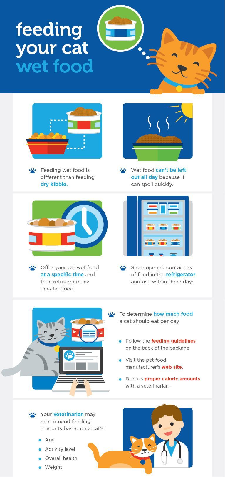 In The Can Wet Food Feeding Guidelines Katzenworld Wet Cat Food Cat Nutrition Canned Cat Food