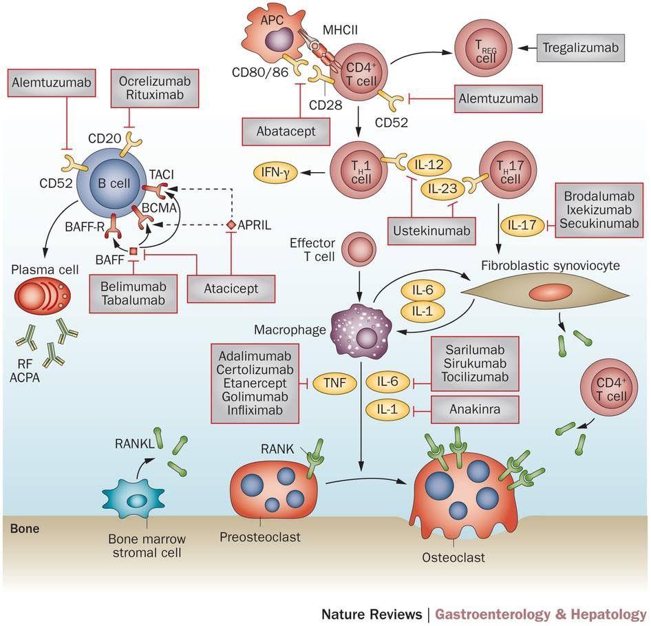 Advances In Use Of Immunomodulatory Agents A Rheumatology