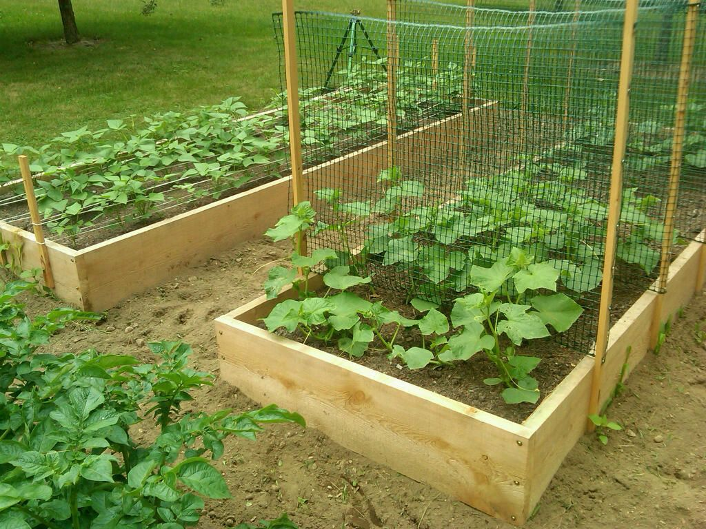 Cucumber trellis will make using new bamboo stakes