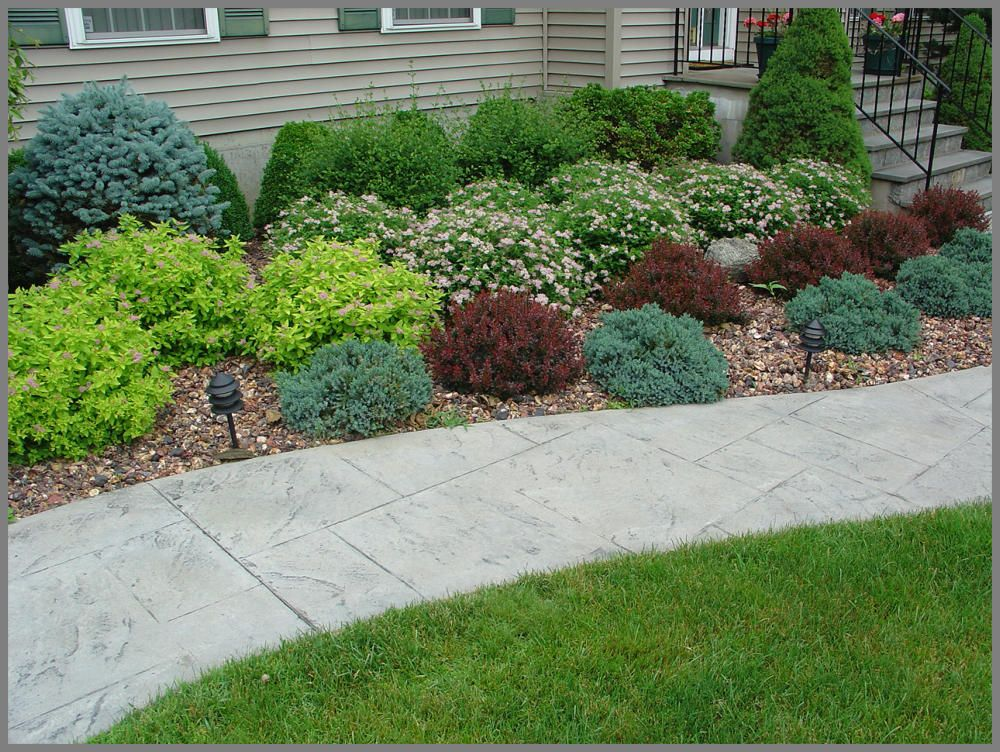 House foundation shrub plantings of barberry spirea blue spruce