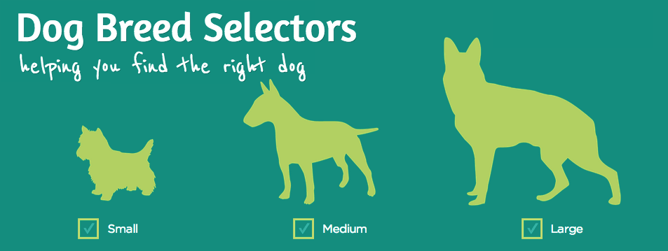 8 Dog Breed Selector Tools For Find Your Perfect Dog Dog Breed Selector Dog Breeds Breeds