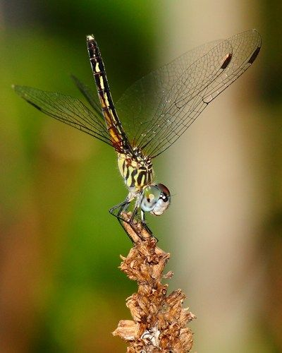 Dragonfly Handstand- 11x14 Print | seryphstudios - Photography on ArtFire