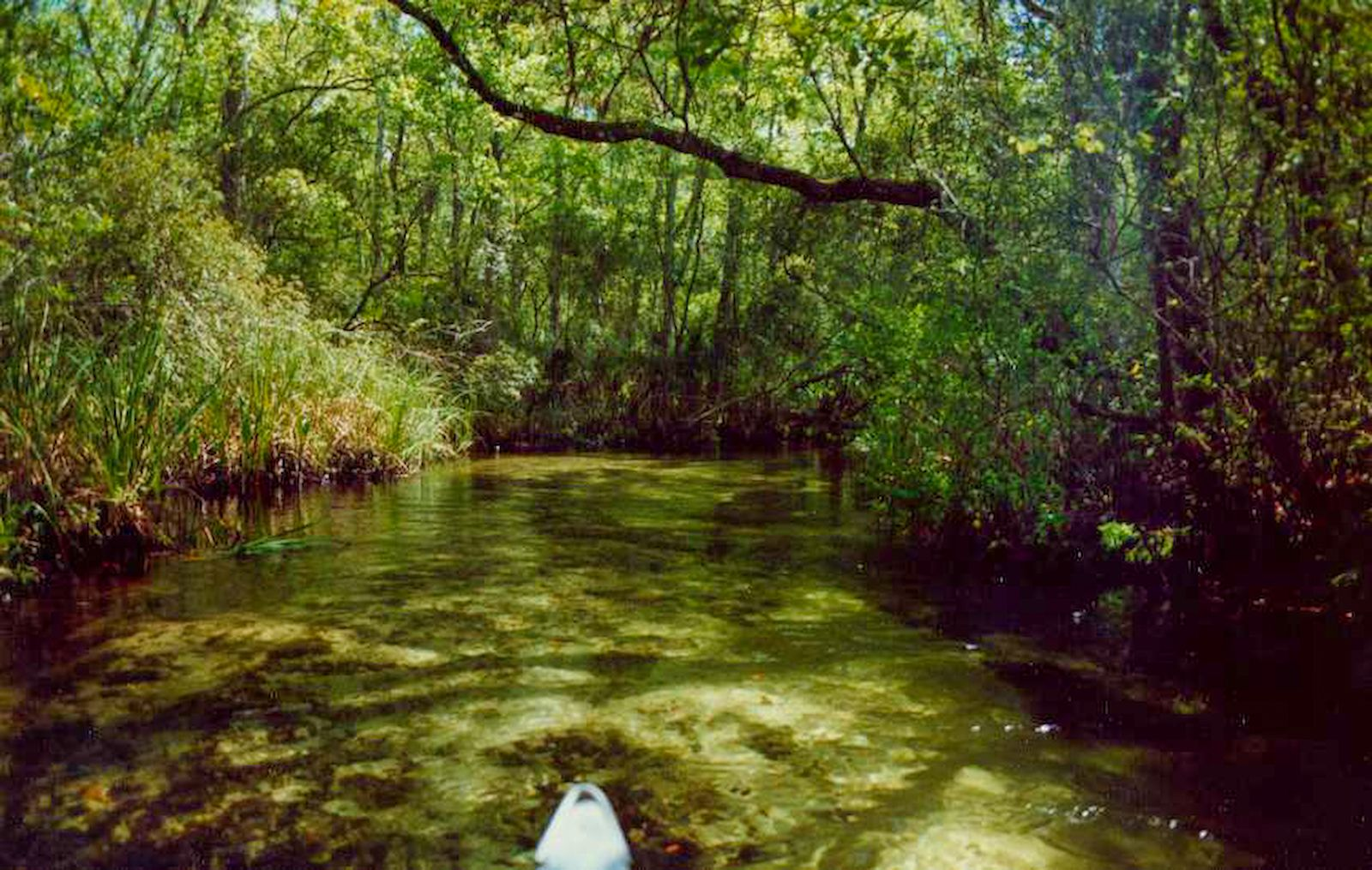 Paddling Juniper Run under dense forest canopy.  Day paddle in Ocala National Forest, Florida