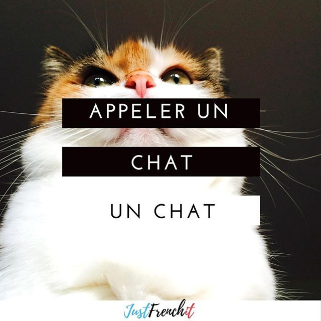 Appeler un chat un chat - to call a cat a cat - to call a spade a ... 820ffa9de9ee