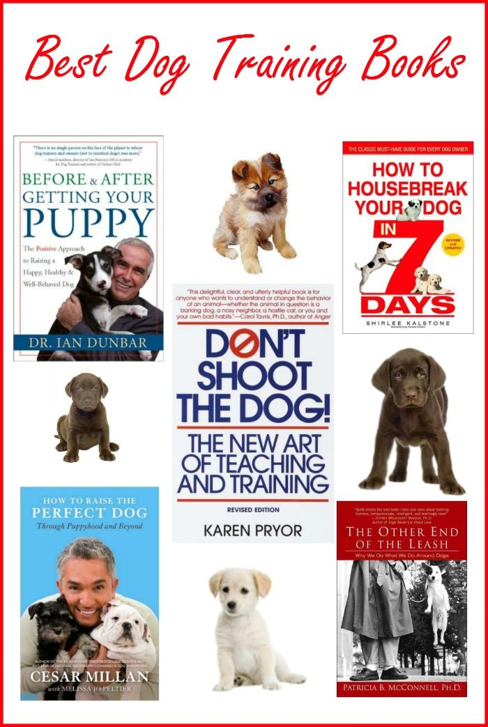 Best Dog Training Books To Get Started With Training Dog Training Books Best Dog Training Books Best Dog Training