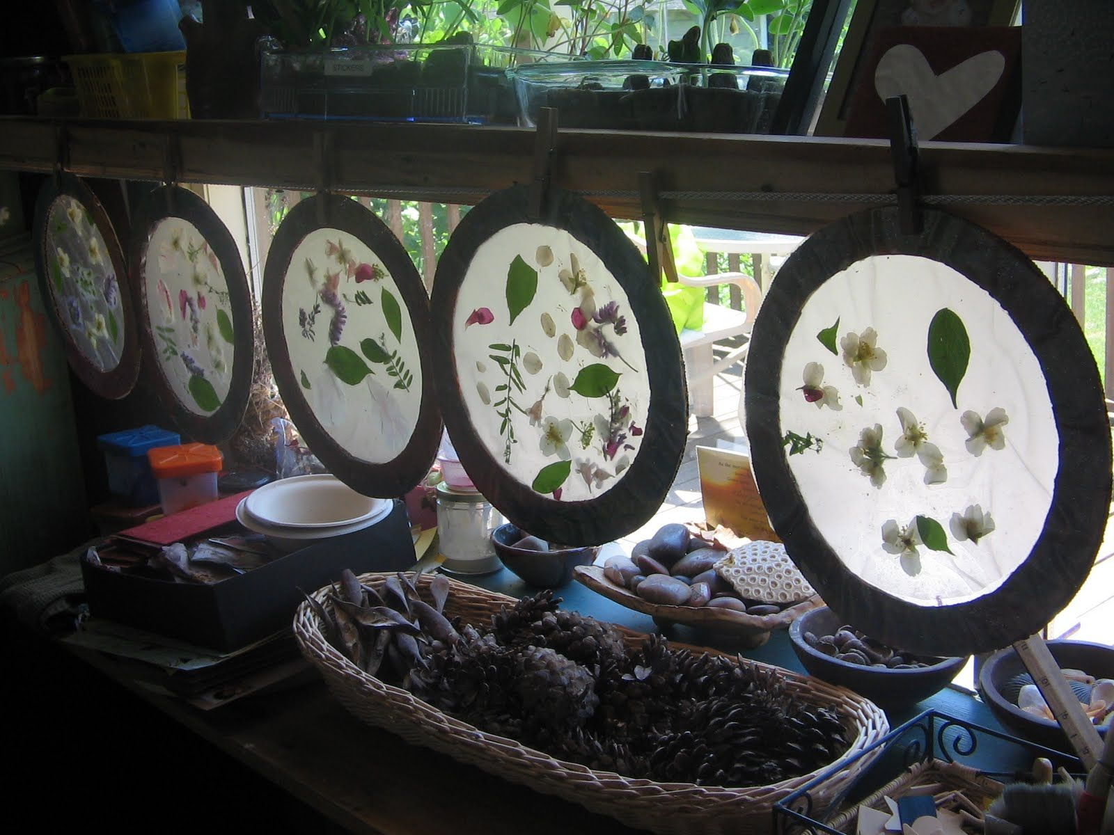 Nature Sun Catchers You Need Heavy Card Stock Or Cardboard Tracing Paper Flower Petals
