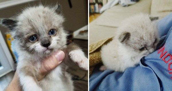 Man Saves Crying Kitten Found Outside The Fence And Becomes His New Dad