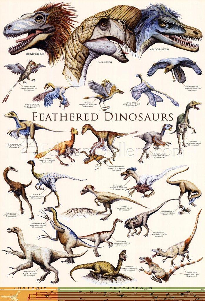 Feathered dinosaurs poster #dinosaur