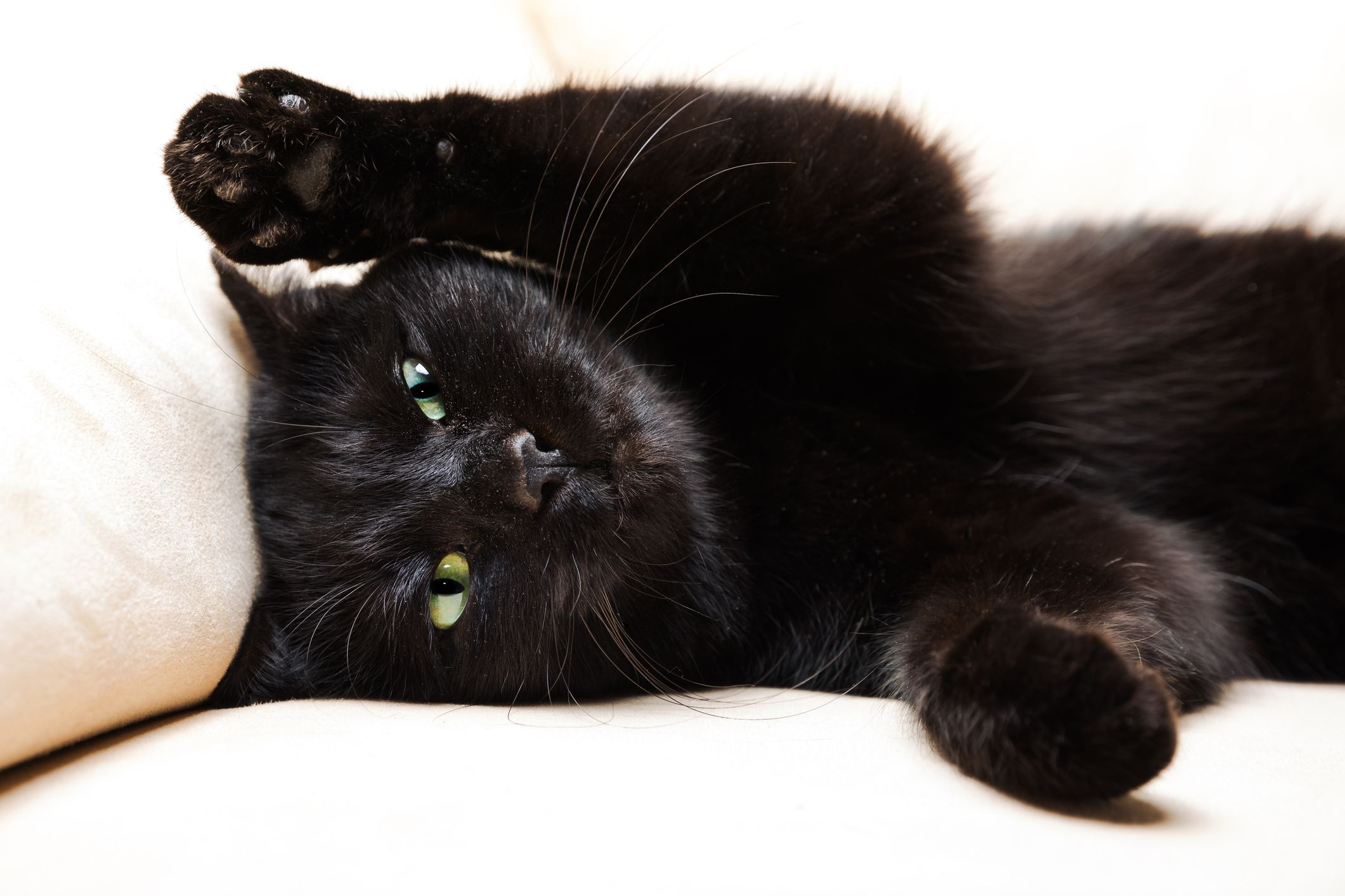 44 Black Cat Names That Are Just as Adorable as Your New