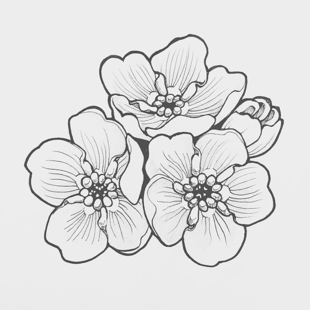 Forget Me Nots Flower Drawing Floral Drawing Flower Sketches