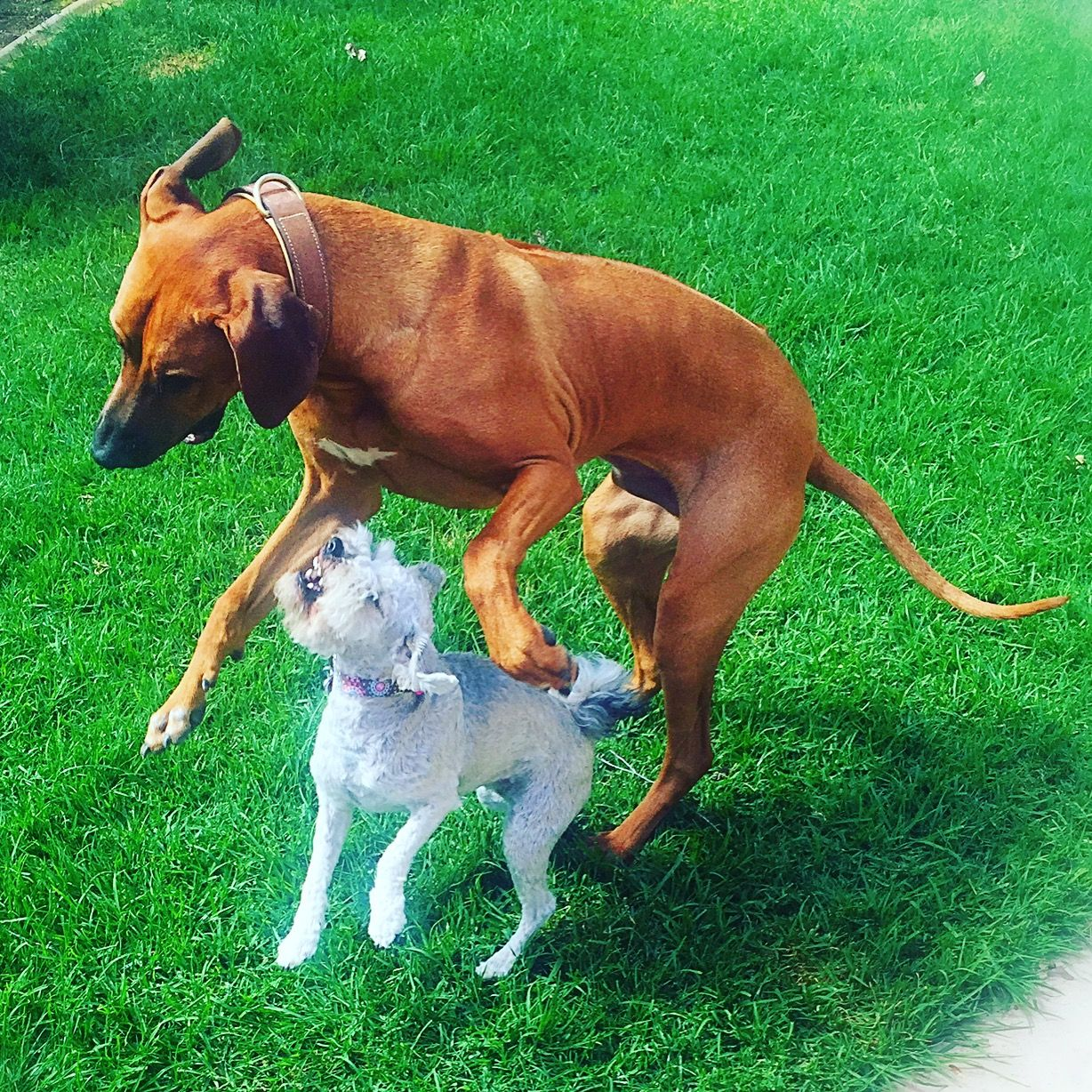 Pin by In Transition on Divine Canine Pet Sitting Pet