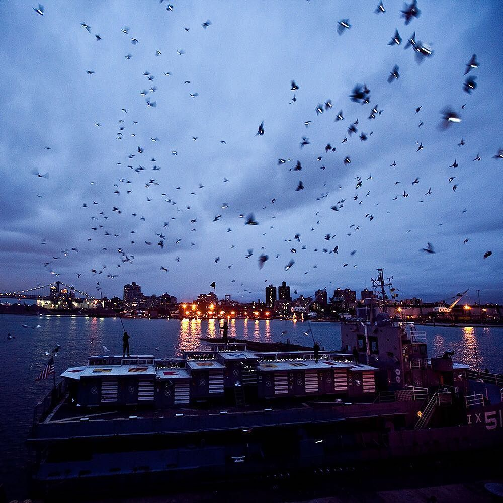 It sounded like something that might be more fun to read about than to observe: 2000 pigeons swooping over the @bklynnavyyard illuminating the sky with LED lights. But on Thursday the pigeons taught everyone on hand quite a bit about their intelligence their ability to collaborate with earthbound beings and their beauty when airborne writes @nytimes art critic Roberta Smith. The piece Fly By Night was commissioned by @creativetimenyc and choreographed by the artist @dukerileystudio who has…