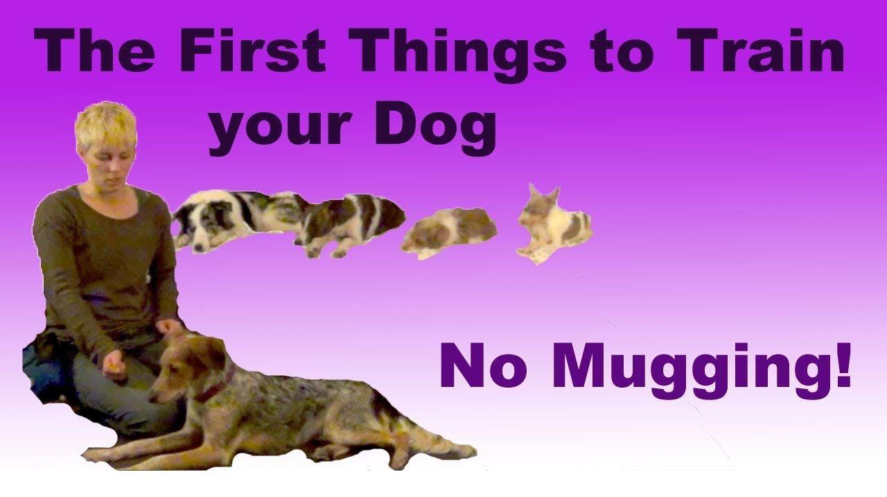 The Most Important Things To Train Your Dog No Mugging