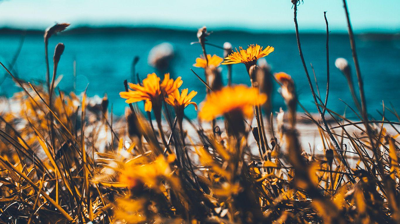 PAPERS.co | desktop wallpaper | nu64-flower-summer-spring-nature