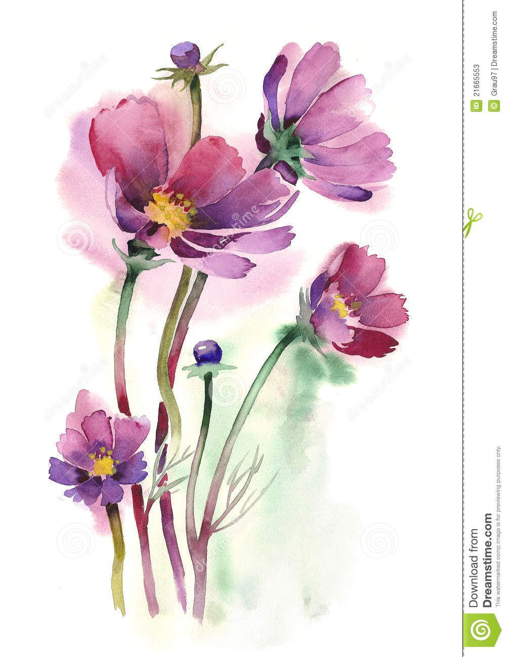 Watercolor cosmos flowers download from over 29 - High resolution watercolor flowers ...