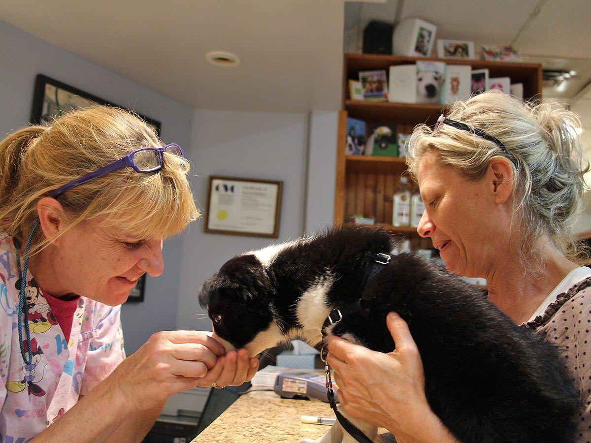 Blog vet clinics veterinary care training your puppy